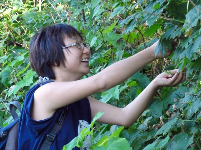 Picture:  Panda forages for thimble berries on the path to Kanaka Creek, Maple Ridge, B.C.