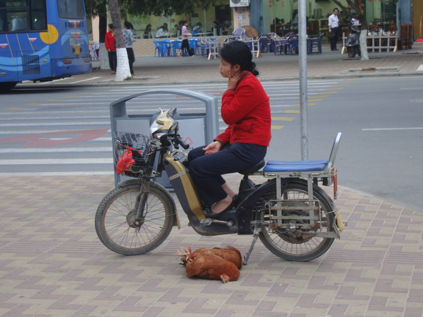 Picture:  Two trussed chickens await their fate while another bored Sanya resident awaits delivery instructions.  Sanya, Hainan Island, China