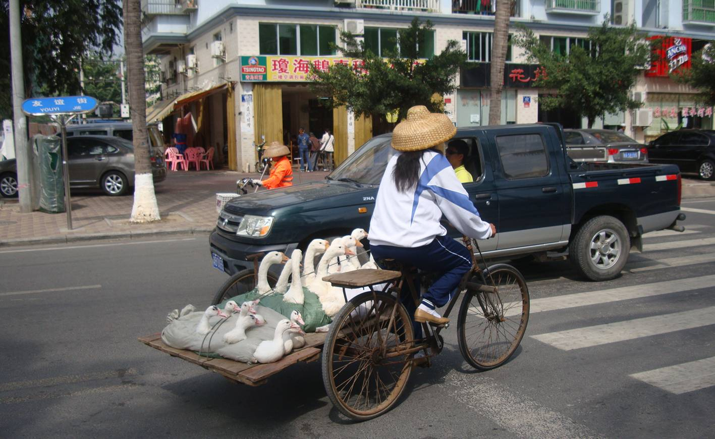 Picture:  Geese to go on the streets of Sanya, Hainan Island, China.