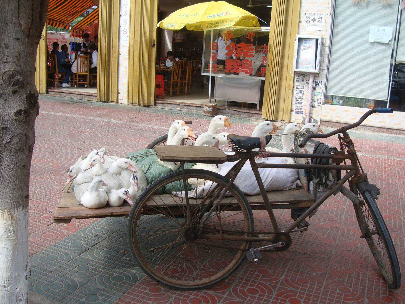 Picture:  You know your food is fresh when you see it delivered.  Sanya goose restaurant, Hainan Island, China