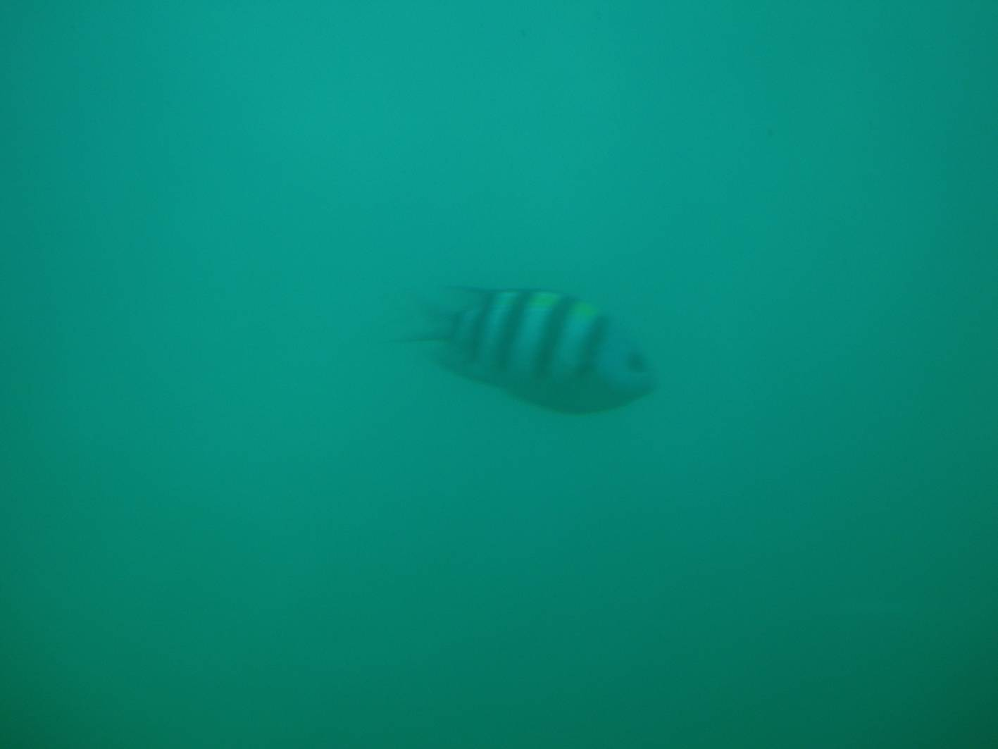 Picture:  The occasional little fish would wander into our field of view.  Submarine tour, Sanya, Hainan Island, China