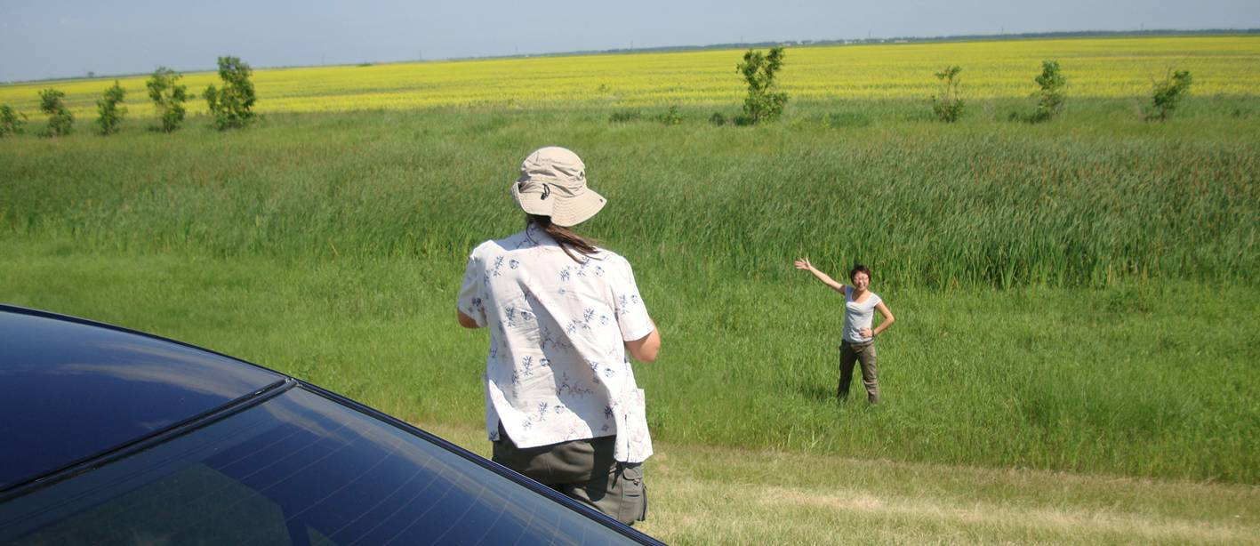 Picture:  We stopped on our way from Winnipeg to Saskatoon to let Panda pose with the canola field.