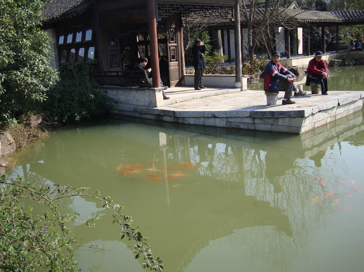 Picture:  Goldfish school in the pond.  Wuxi old city, Wuxi, China