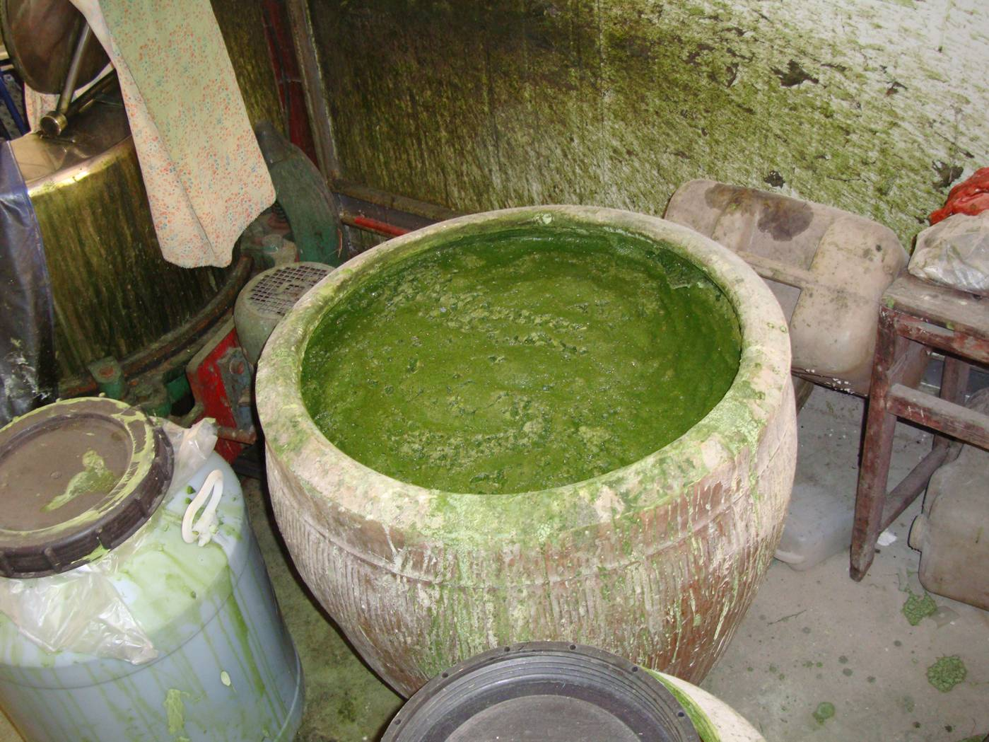 Picture:  A large jar of grass stains, used to colour the qing tuanzi.  Yang Shan, Wuxi, China