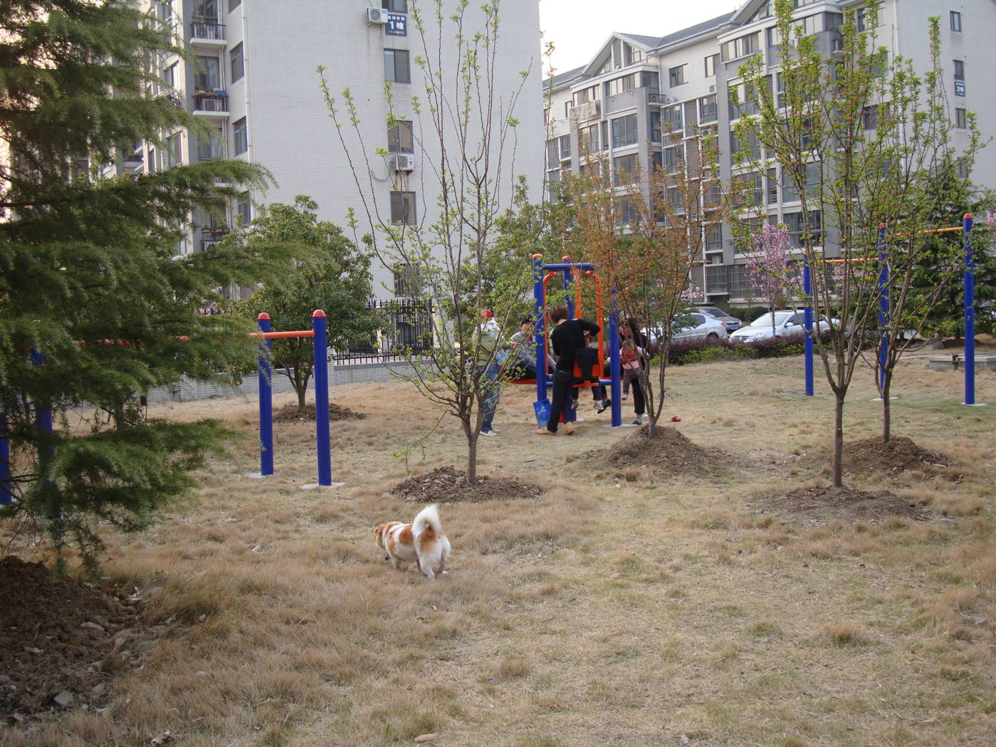 Picture:  GouGou goes off leash in the new playground area.  Jiangnan University, Wuxi, China
