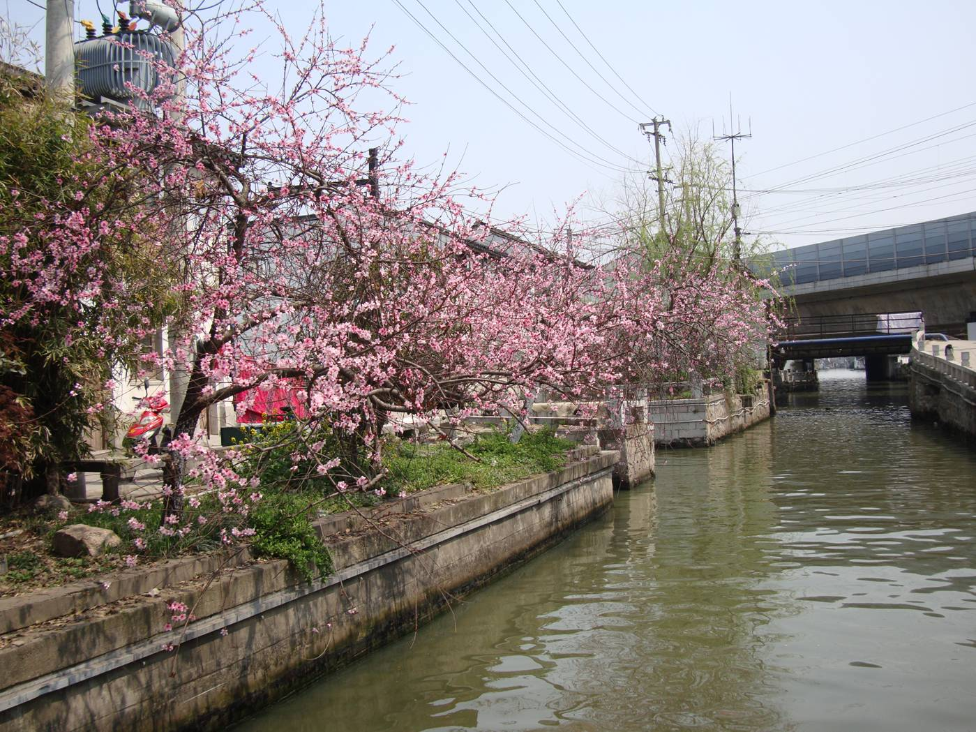 Picture:  It's Spring, and many sections of the canal are lined with pink blossomed trees.  Suzhou, China