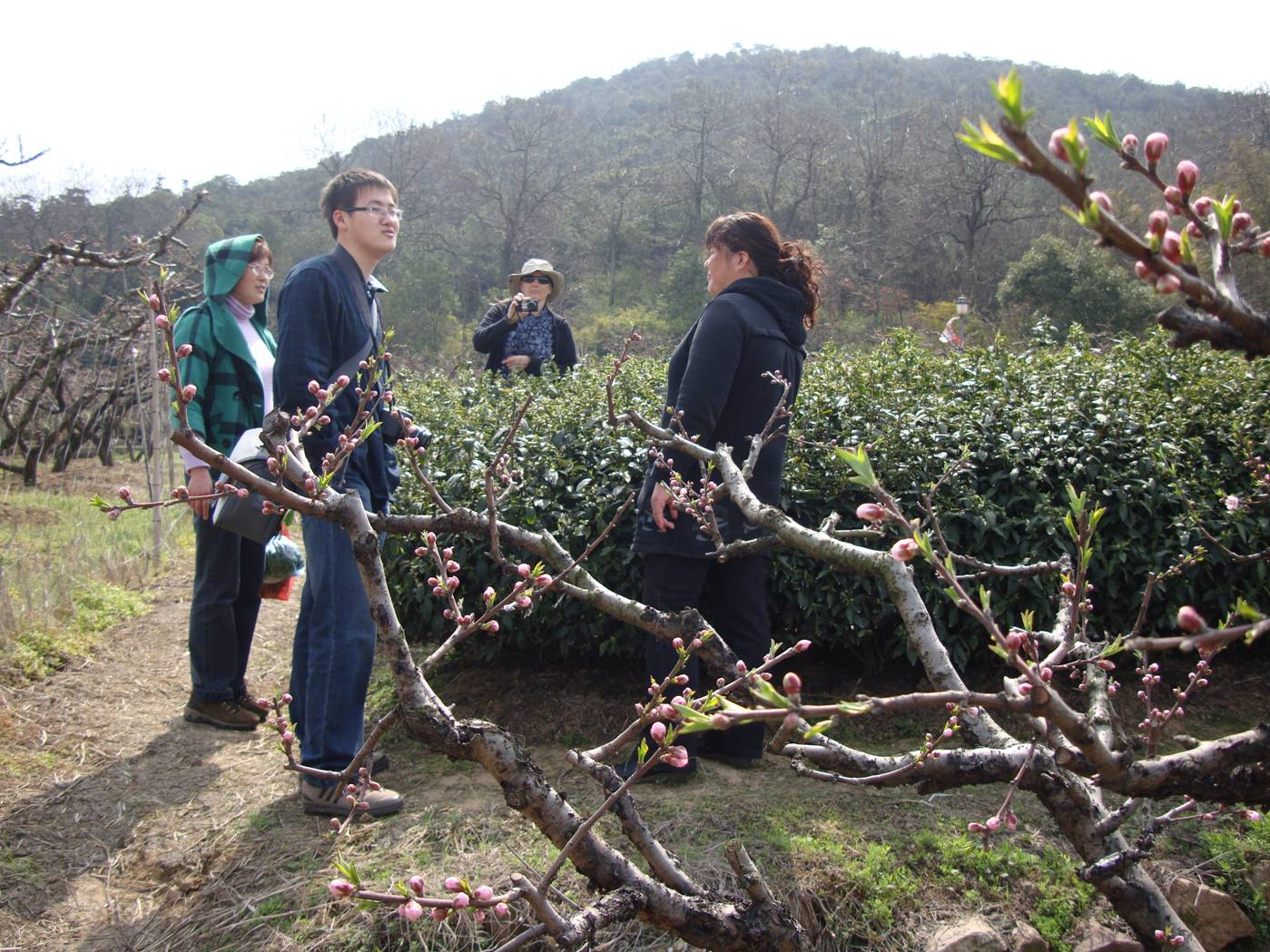 Picture:  The farmer shows off her tea trees.  Yang Shan, Wuxi, China