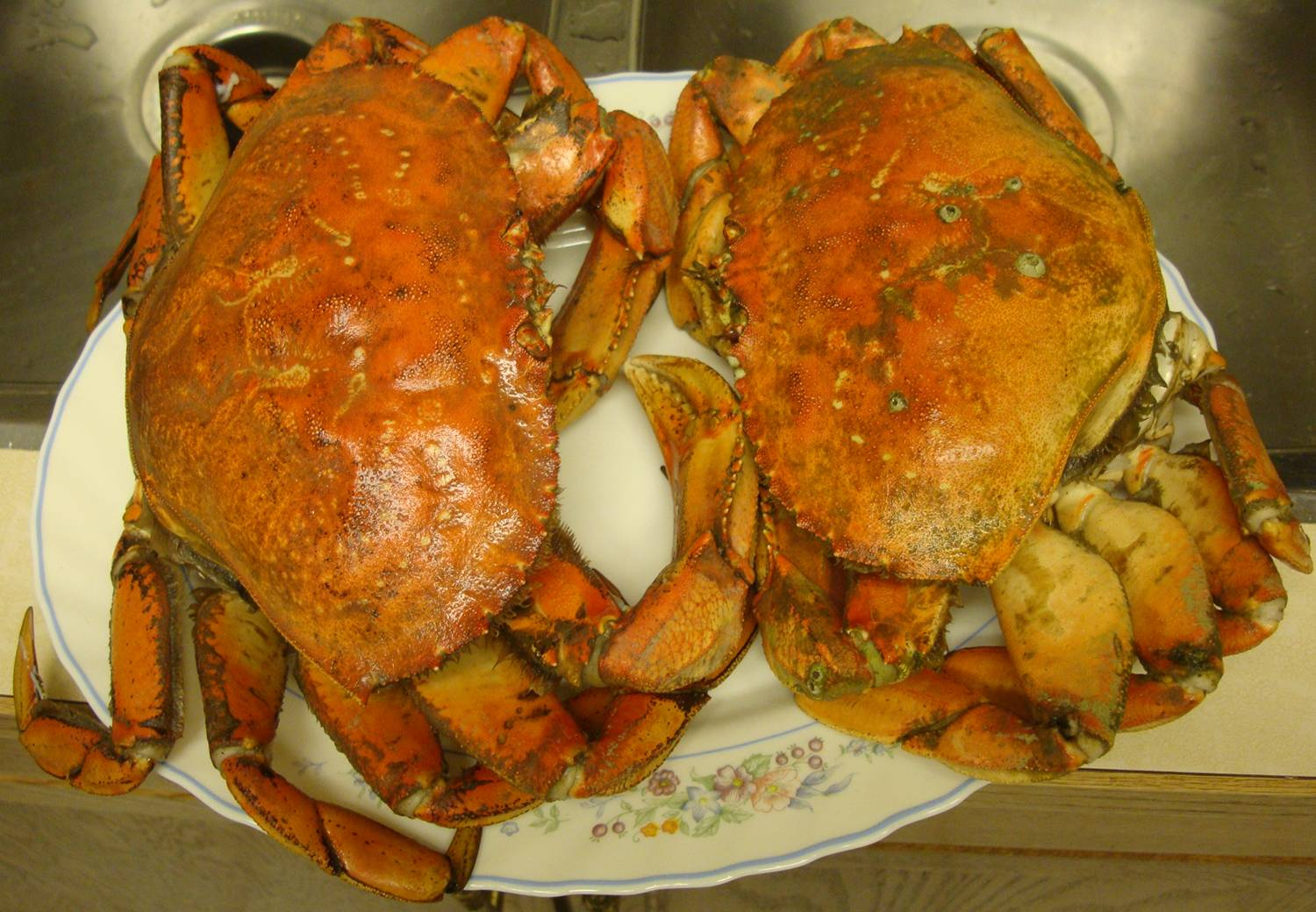pictture:  two large Dungeness crabs, steamed, cleaned and ready to eat.  Thanks Don.