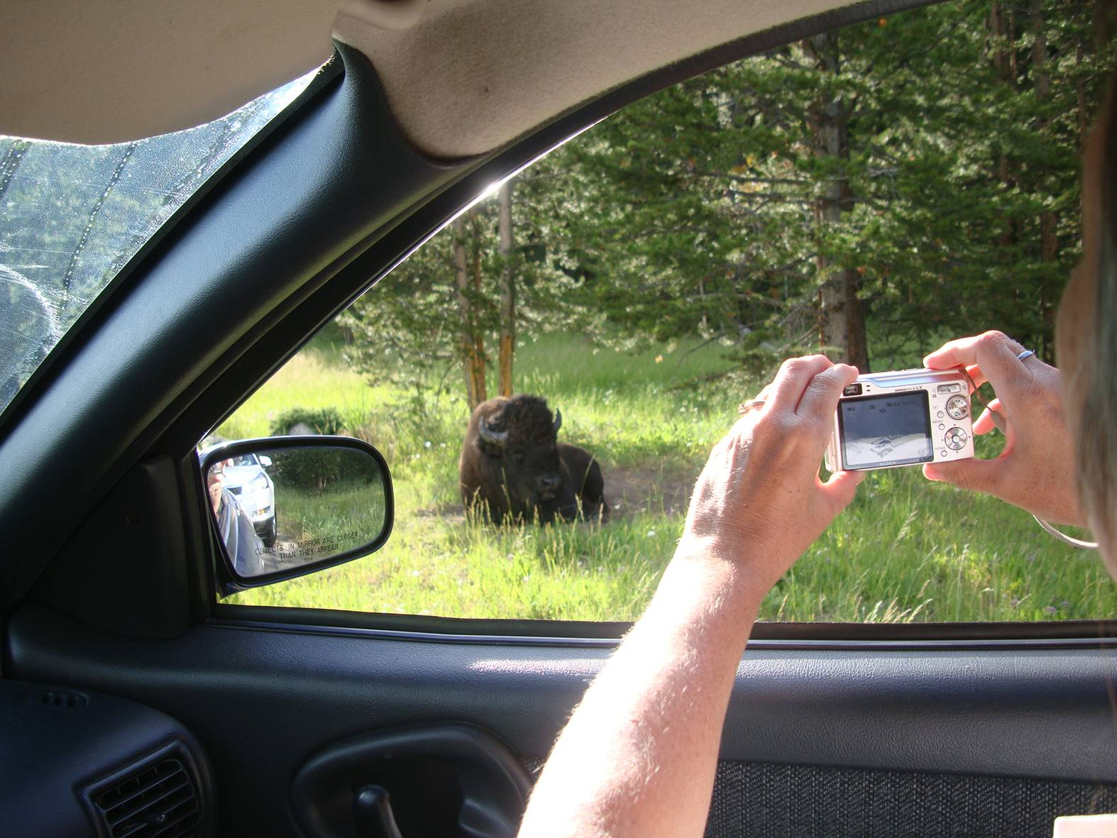 picture: It looked like a big boulder, and nobody was seeing it until Ruth spotted the bison.  Yellowstone park.