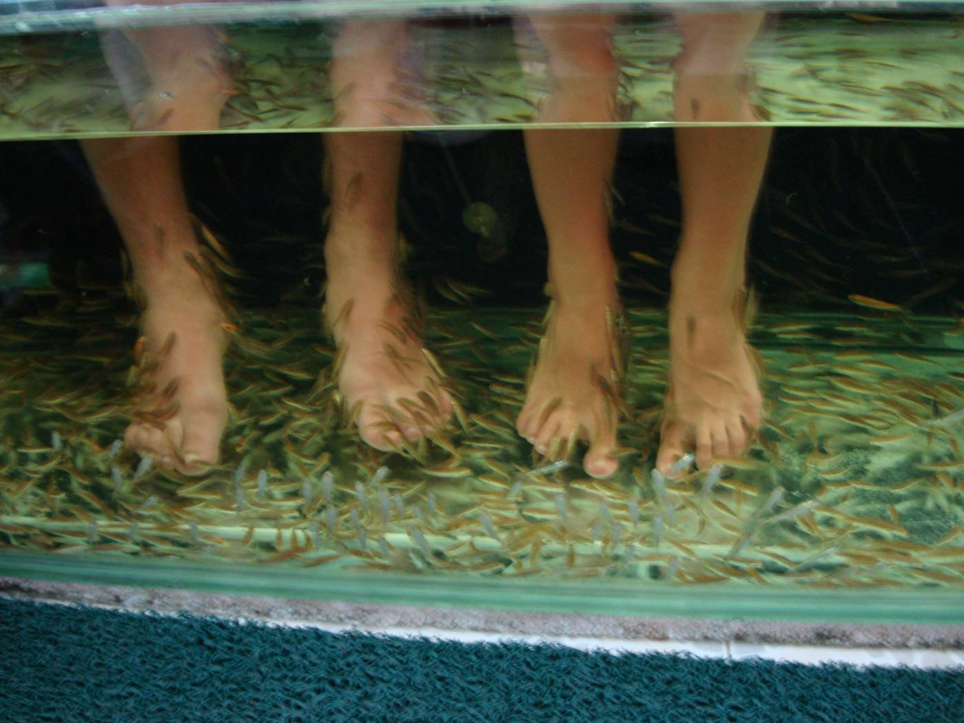"Picture:  Feet being cleaned by ""doctor fish"", Karon Beach, Phuket Island, Thailand"