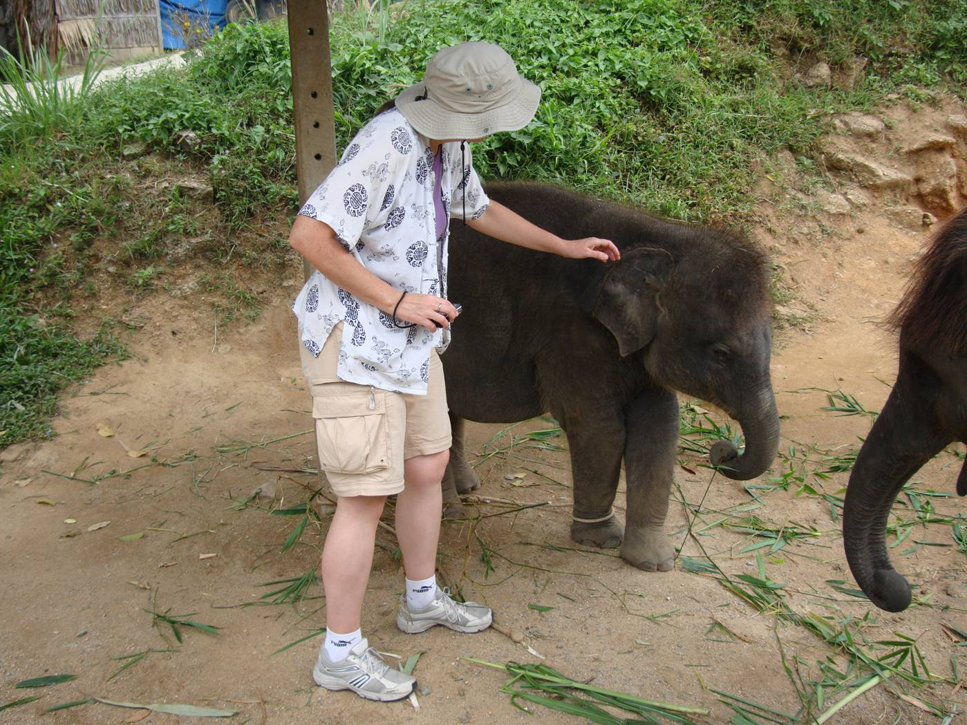 Picture:  Ruth approaches the baby elephant, Phuket Island, Thailand