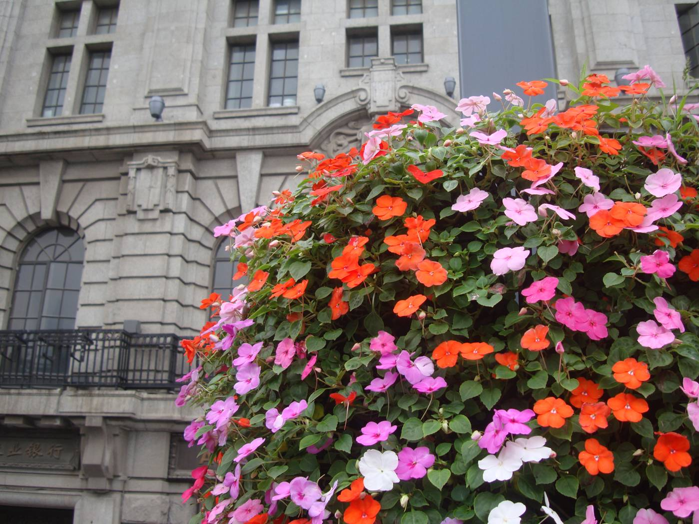 Picture:  From the upper deck of the tour bus, I was on the same level as the flower baskets.  Shanghai, China.