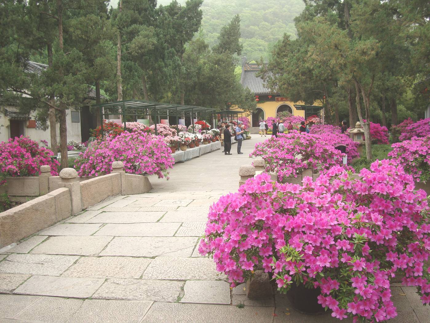 Picture:  Flowers everywhere along the path in Xi Hui Park, Wuxi, China