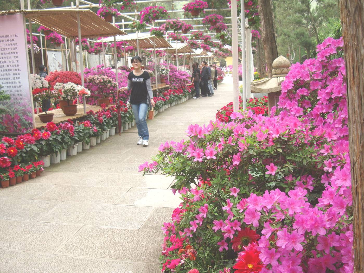 Picture:  The display of flowers in Xi Hui Park, Wuxi, China