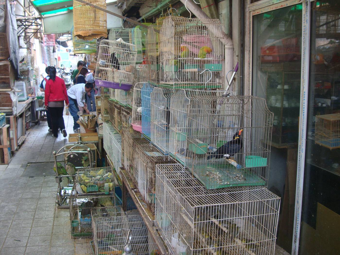 Picture:  All kinds of birds for sale, plus rabbits and chicks and dogs.  Wuxi, China