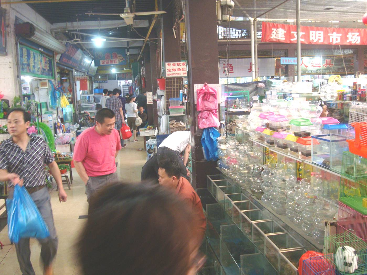 Picture:  This is like a western big box pet accessories store, only bigger.  Wuxi, China