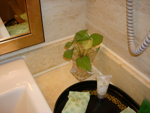 real ivy in the bahthroom,  Mandarin Gardens Hotel,  Nanjing,  China