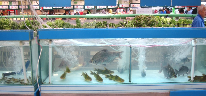 Picture:  Auchan supermarket fish tank