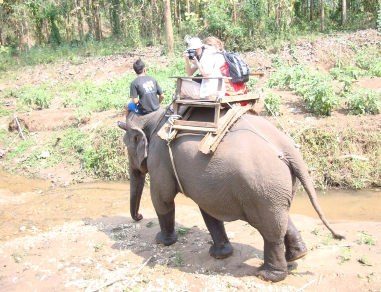 Picture: Ruth's elephant wanders along the stream.
