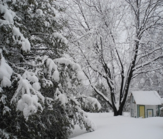 Picture:  Winter in Lise's back yard in Gatineau, Canada