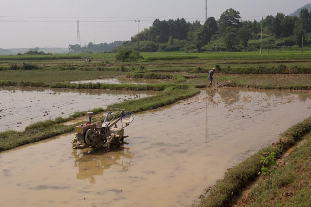 Picture: A robomule in a field near Shuibian, Jiangxi, China